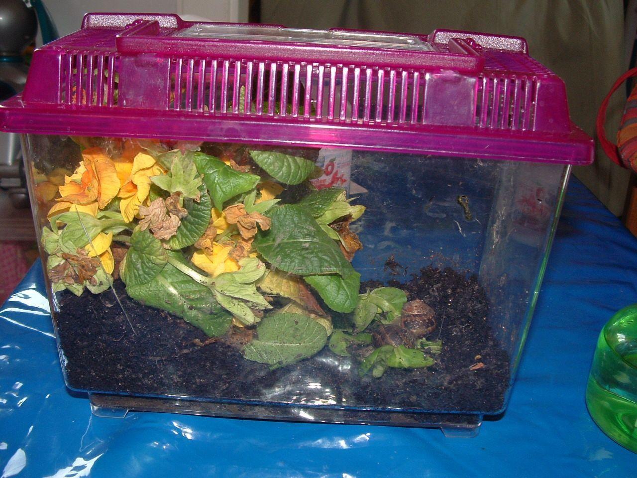 L h liciculture ou l 39 levage d escargot for Pompe pour petit aquarium poisson rouge